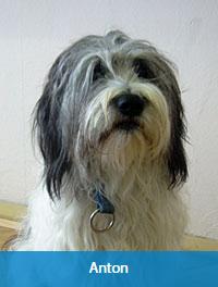 Schulhund Anton